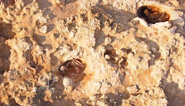 Algunas de las fosas simples excavadas en la necrópolis.